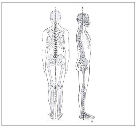 人間の体を保つS字カーブの原理